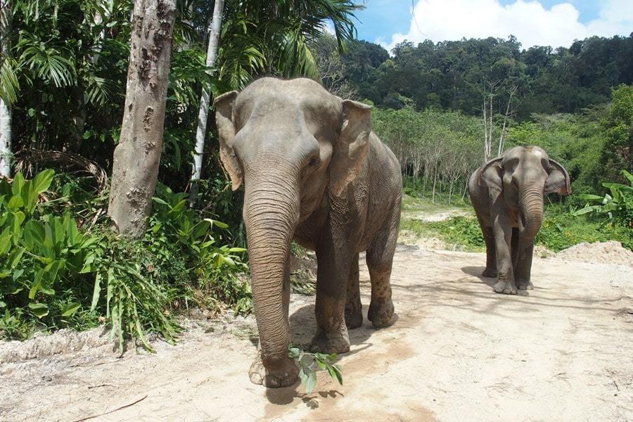 things to do in thailand, elephant sanctuary chiang mai phuket