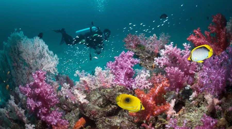 things to do in thailand scuba diving in koh tao-min