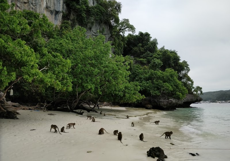 Phi Phi Island Monkey Beach 1