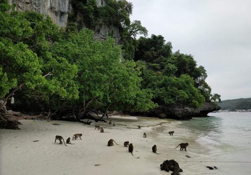 Phi Phi Island Monkey Beach