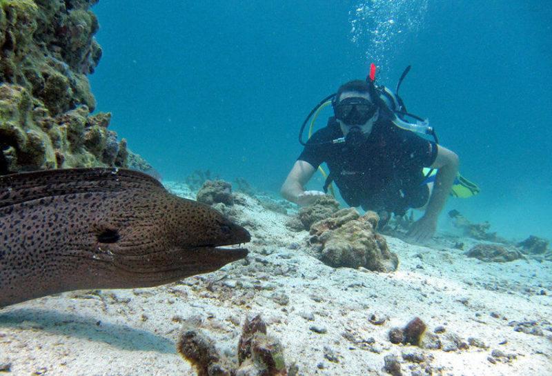 Phi Phi Island Scuba