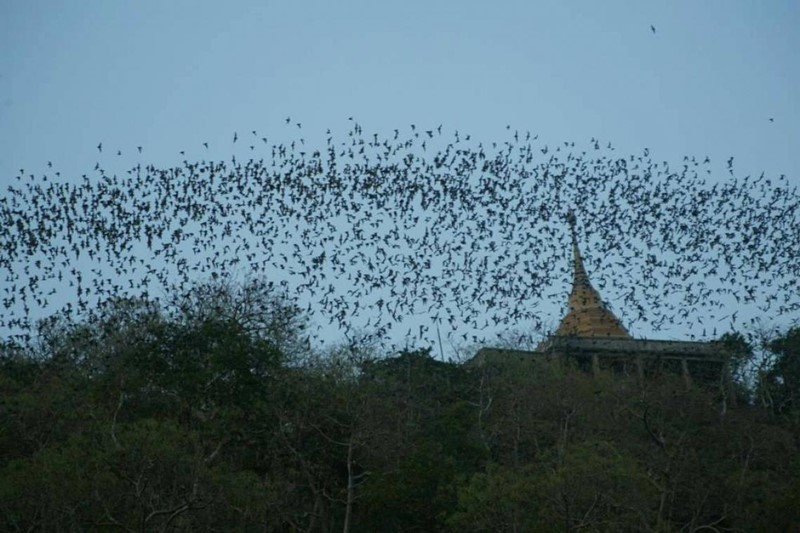 bat cave suen phueng