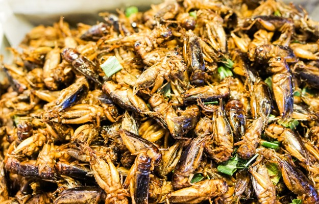 eat crickets bugs in thailand