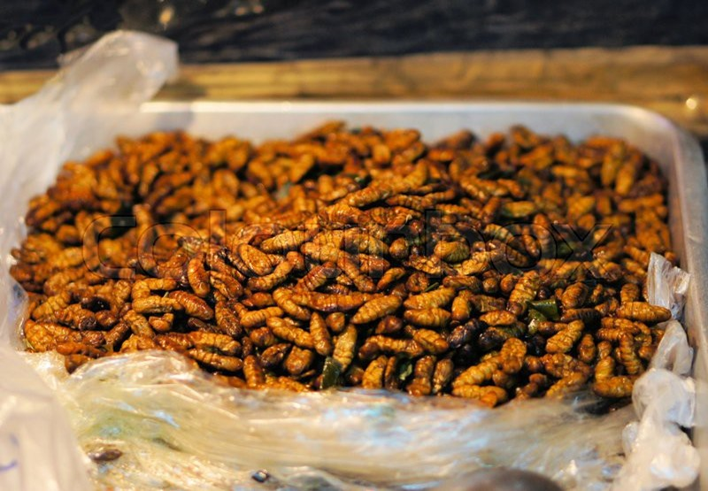 eating bugs insects thailand silk worms