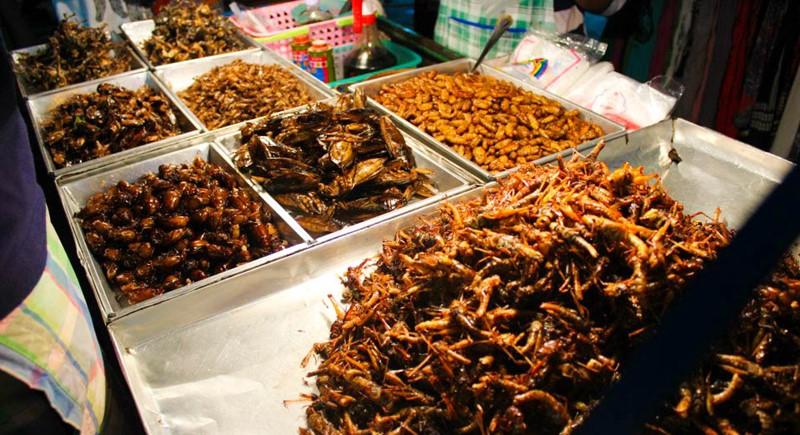 eating bugs on khaosan road