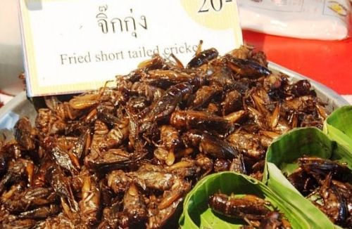 eating fried crickets bugs insects in thaialnd
