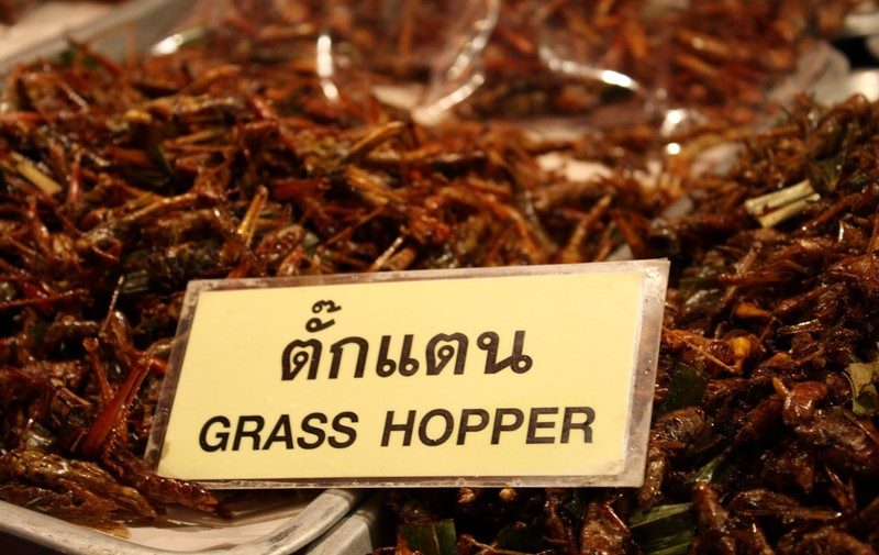 eating grasshoppers in thailand