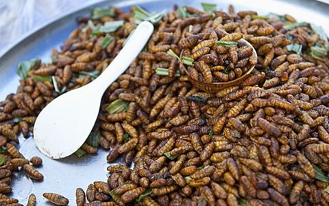 fried bamboo worms eating insects and bugs in thailand