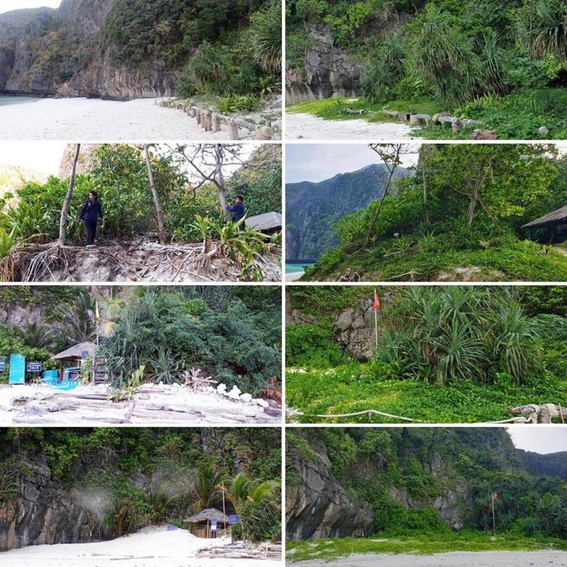 maya bay before and after