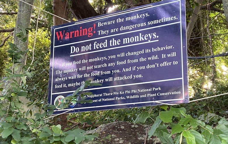 monkey beach phi phi island monkey beach sign can you feed monkeys on the beach in koh phi phi