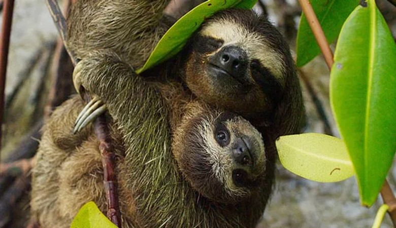 three toed sloth best travel movies bbc travel movies sir david attenbourogh travel movies planet eart travel movies inspirational travel movies that make you want to travel